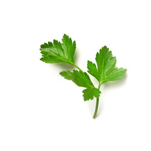 Parsley Isolated. Parsley On A...