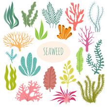 Seaweeds. Aquarium Plants, Underwater Planting. Vector Seaweed Silhouette Isolated Set