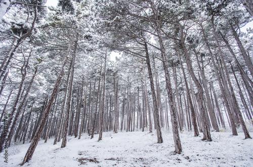 zimowego-lasu