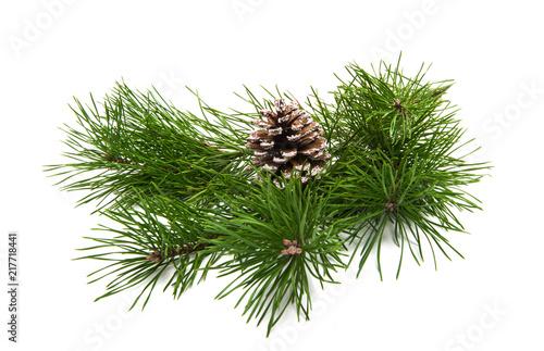 Obraz green pine branch isolated - fototapety do salonu