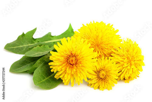 Dandelion flowers with leaves close-up.