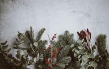 Festive Holiday Foliage Flatlay Background