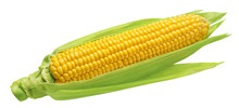 Corn Cob With Green Leaves Isolated On White Background