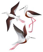 Stylized Birds - Banded Stilt