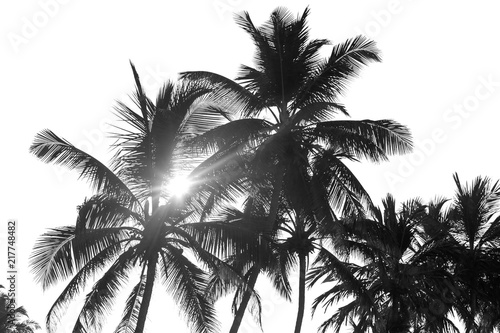 In de dag Palm boom black and white palm trees on white isolate background