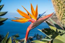 Strelitzia Flower, The Nationa...