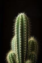 Close-up Of Cactus Against Bla...