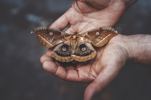 Cropped Hands Of Man Holding Butterfly