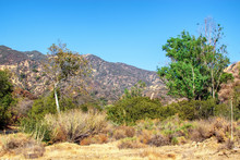 Dry Summer Brush And Trees In Southern California Mountains Near Areas Of Recent Forest Fires