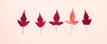 Multicolored Autumn Leaves Pattern On Pink Background
