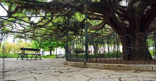 Valokuva  grand arbre,