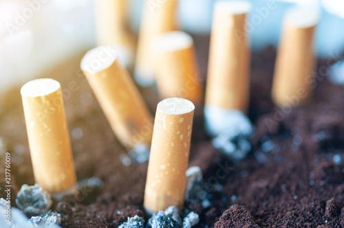 Fényképezés  Cigarette butts in ashtray with light flare.