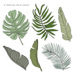Tropical green palm leaves on the white background. Vector greenery elements. Jungle foliage illustration. Exotic plants set. Summer beach floral design. Paradise nature graphic