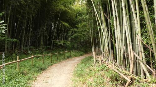In de dag Bamboo 愛知 緑地公園 夏 日中 ハイキング 散策 竹林