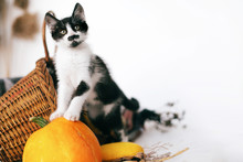 Cute Kitty Standing On Pumpkin At Cozy Wicker Basket And Zucchini In Light On Wooden Background. Harvest And Hello Autumn Concept With Space For Text. Happy Thanksgiving And Halloween