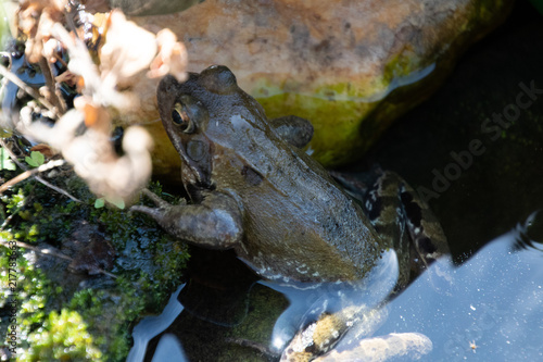 Tuinposter Kikker frosch