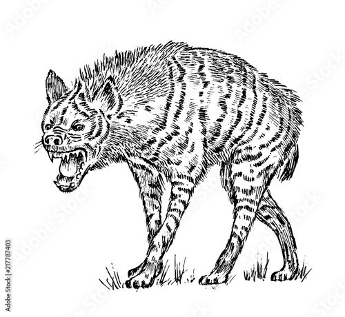 African spotted hyena. Wild animal. Engraved hand drawn old monochrome Vintage sketch.