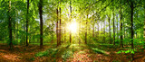 Fototapeta Nature - Beautiful forest in spring with bright sun shining through the trees