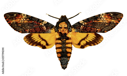Acherontia atropos on a white background Canvas Print