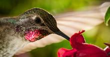 Head Shot Of Hummingbird With ...