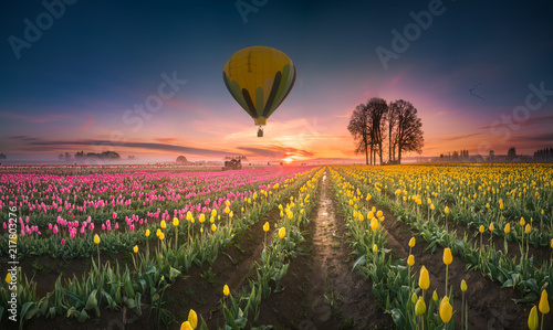 This is a photograph of a hot air balloon hovering over tulip field at dawn