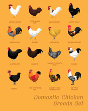 Domestic Chicken Breeds Set Cartoon Vector Illustration