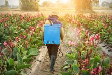 Planter Spraying Pesticide In ...
