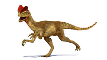 Dilophosaurus, Theropod Dinosaur From The Early Jurassic Period (3d Render Isolated With Shadow On White Background)