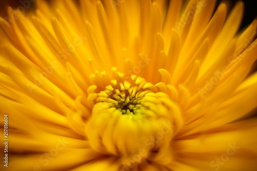 Tuinposter Macrofotografie Beautiful dreamy macro flower photos
