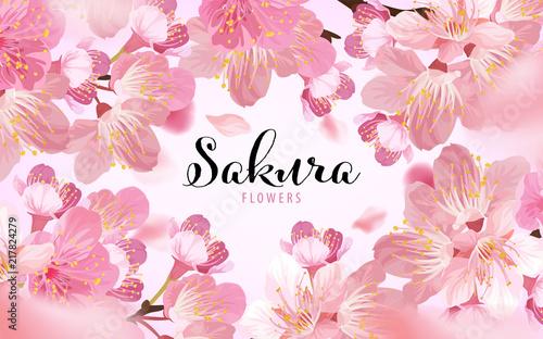 Photo  Sakura flowers background template