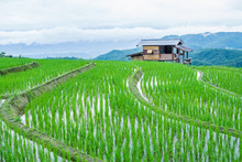 View Terraced Paddy Field In M...