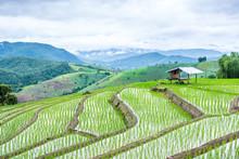 View Terraced Paddy Field In Mae-Jam Village, Chaingmai, Thailand