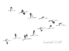 Flock Of Migrating Storks Flyi...