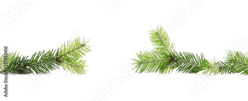 Fényképezés Pine branch, natural decoration isolated on white background
