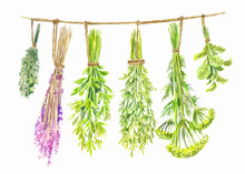 Herbs Are Dried On A String. W...