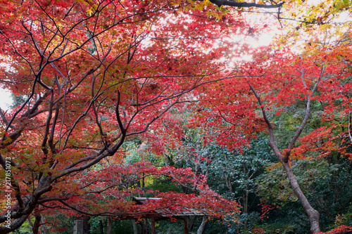 Papiers peints Kyoto 京都の紅葉