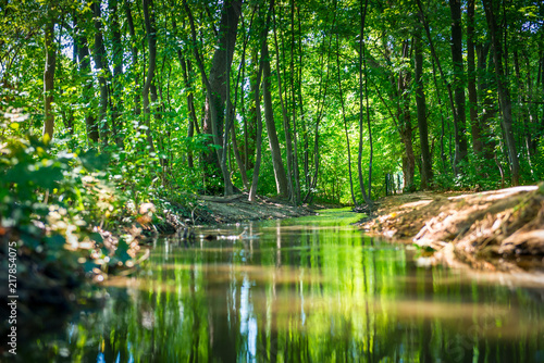 Poster Rivière de la forêt small river through a forest with a path