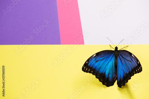 Fotografie, Obraz  Morpho butterfly