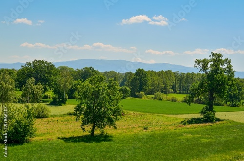Foto op Canvas Blauw Beautiful spring landscape. Green trees and clearing with mountains in the background.