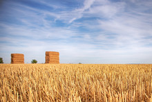 Straw Bales On The Field. Close-up. Agricultural Landscape