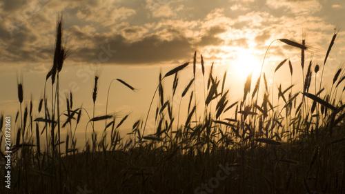 Photo  Beautiful nature sunset landscape