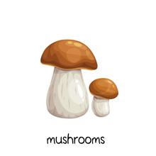Porcini Mushrooms Or Boletus E...