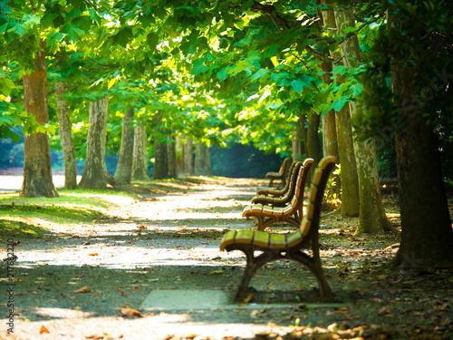 Photo  木漏れ日の中のベンチ