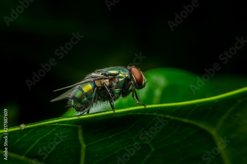 Tuinposter Macrofotografie Fly in macro wallpaper