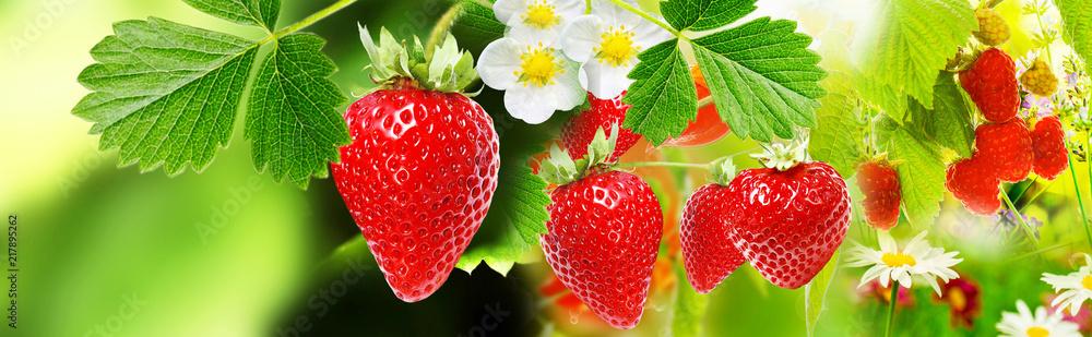 Fototapety, obrazy: strawberries witch garden raspberries