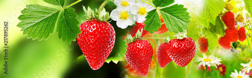 strawberries witch garden raspberries