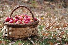 Bir Sepet Elma 2