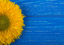 Bright Yellow Sunflower On A Blue Wooden Background (top View, Copy Space On The Right For Your Text), Selective Focus On The Flower Petals