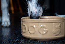 Dog Eating Out A Large Ceramic...
