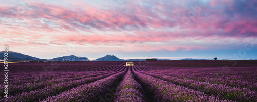 Spoed Foto op Canvas Aubergine Purple morning